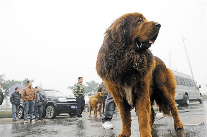 深圳市中心公园动物